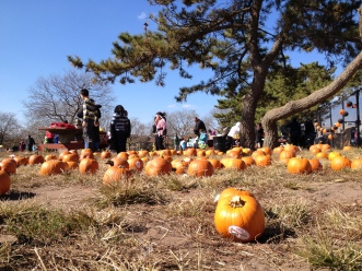 Pumpkin Picking at Sandy's Halloween Hope - Xue Yu (Alice)